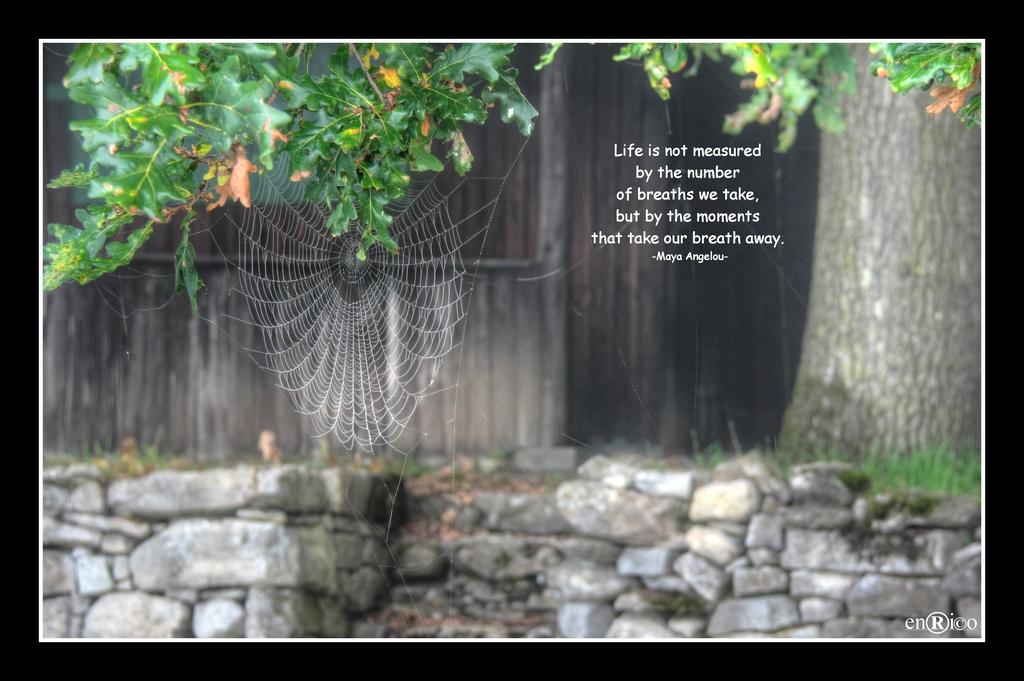 Spinnenweben - ISO100, 50mm, F5, 1/30s