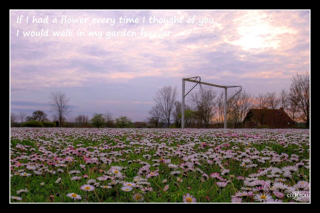 Wenn ich für jedes Mal, wenn ich an dich gedacht habe, eine Blume hätte, könnte ich in meinem Garten für immer laufen...
