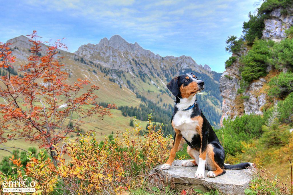 Vor einem Bergmassiv auf einem Stein posiert der kleine Hund Nala
